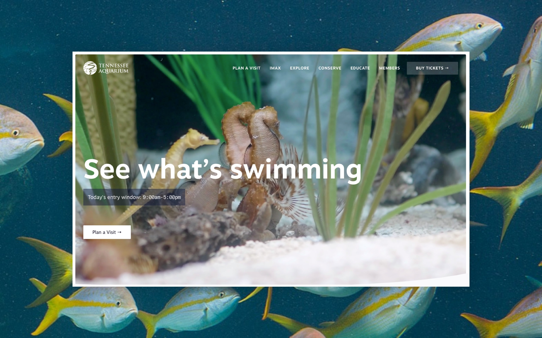 Screenshot of the header section of the new Tennessee Aquarium website.
