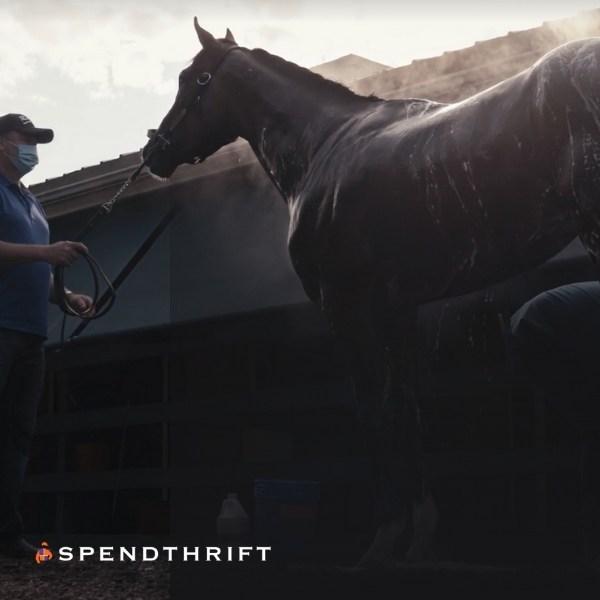 Spendthrift Farm