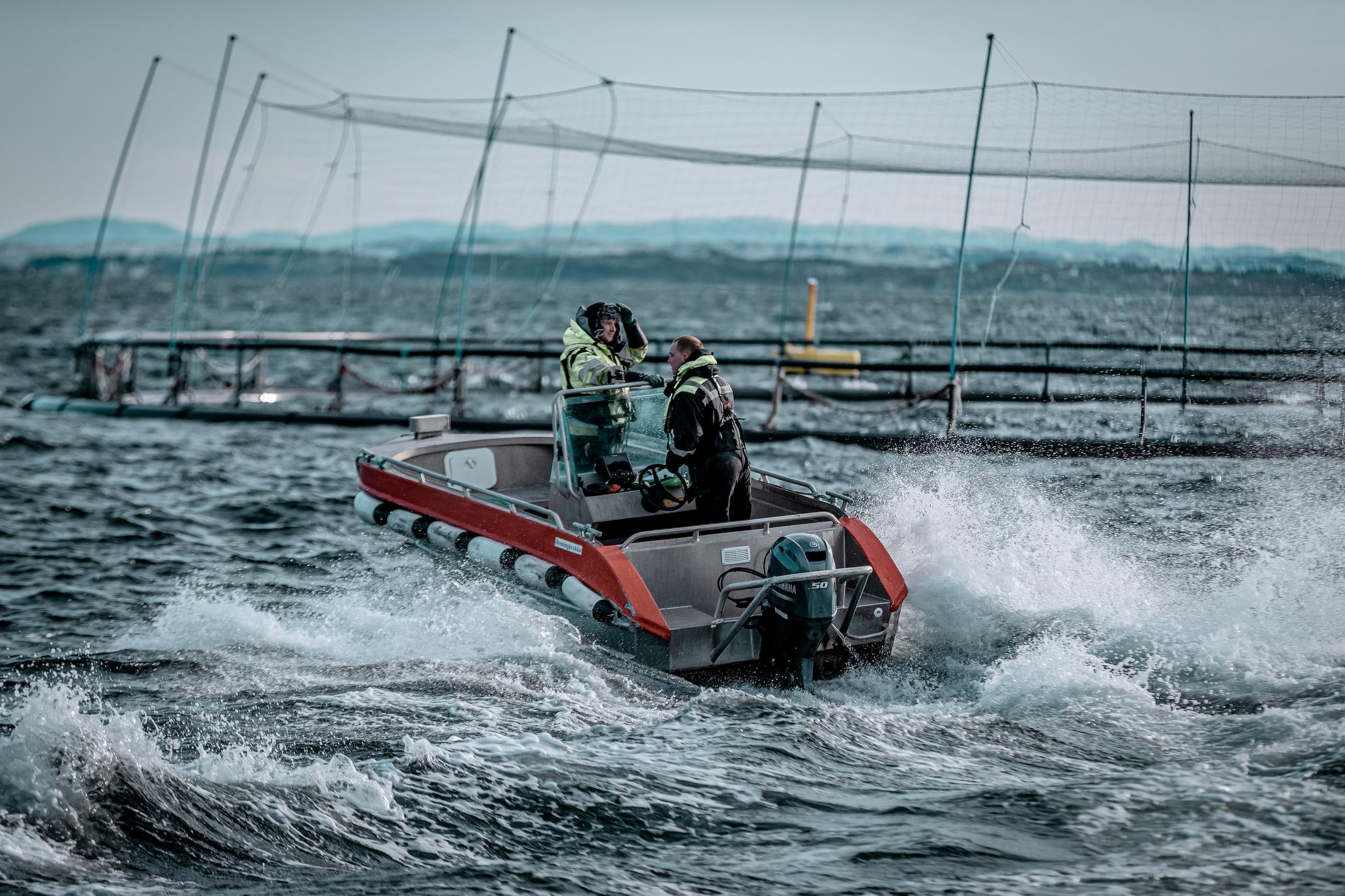 75% av ansatte i Måsøval har investert i selskapet