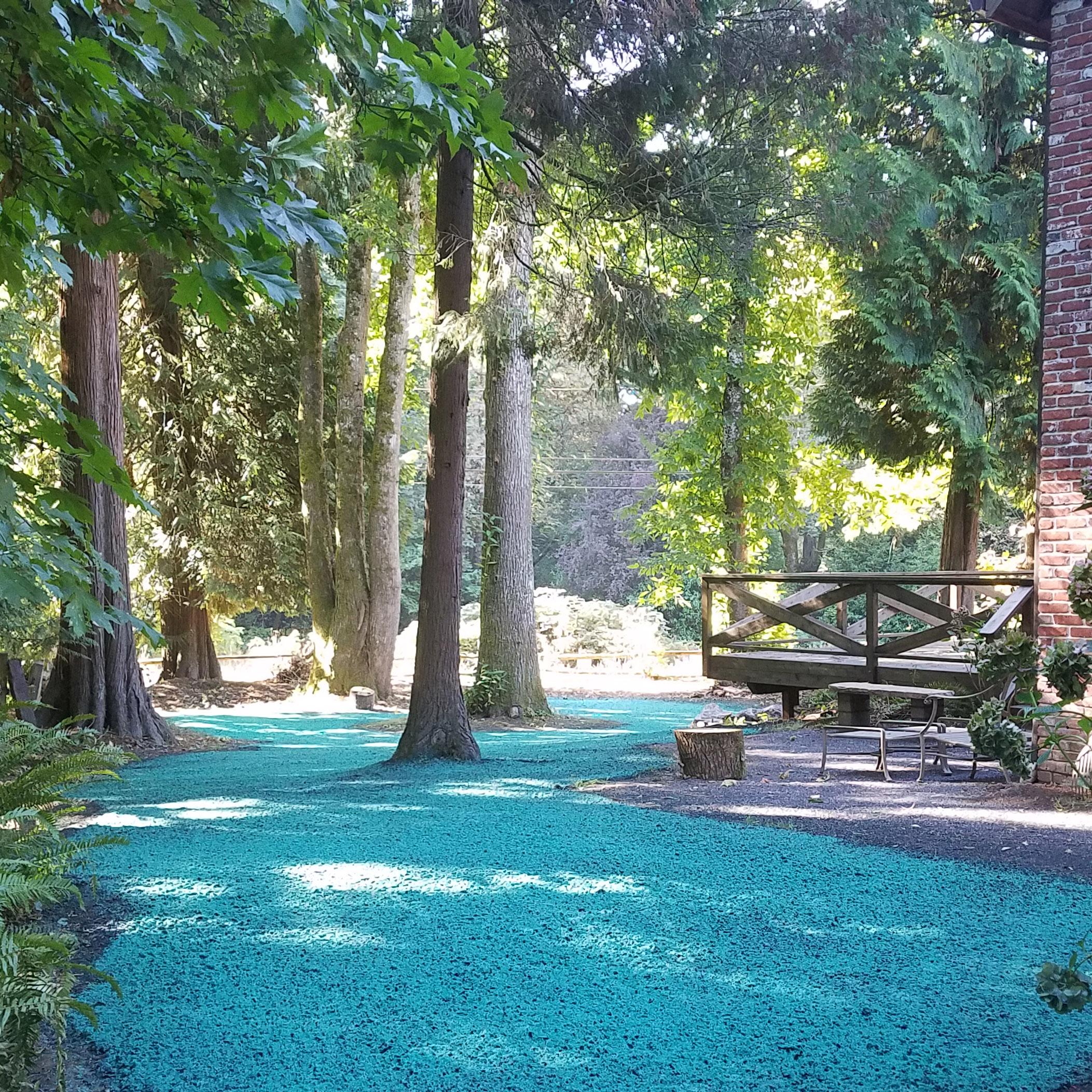 Hydroseed lawn repair in treed area