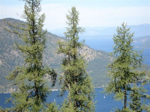 Partial View of the Southern End of Lake Pend Oreille
