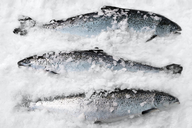Fryst ikke-levende fisk som ligger på en benk dekket av snø og is.
