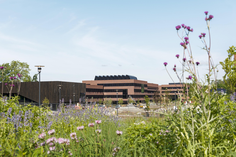 Bygningen til Campus Ås med en blomstereng