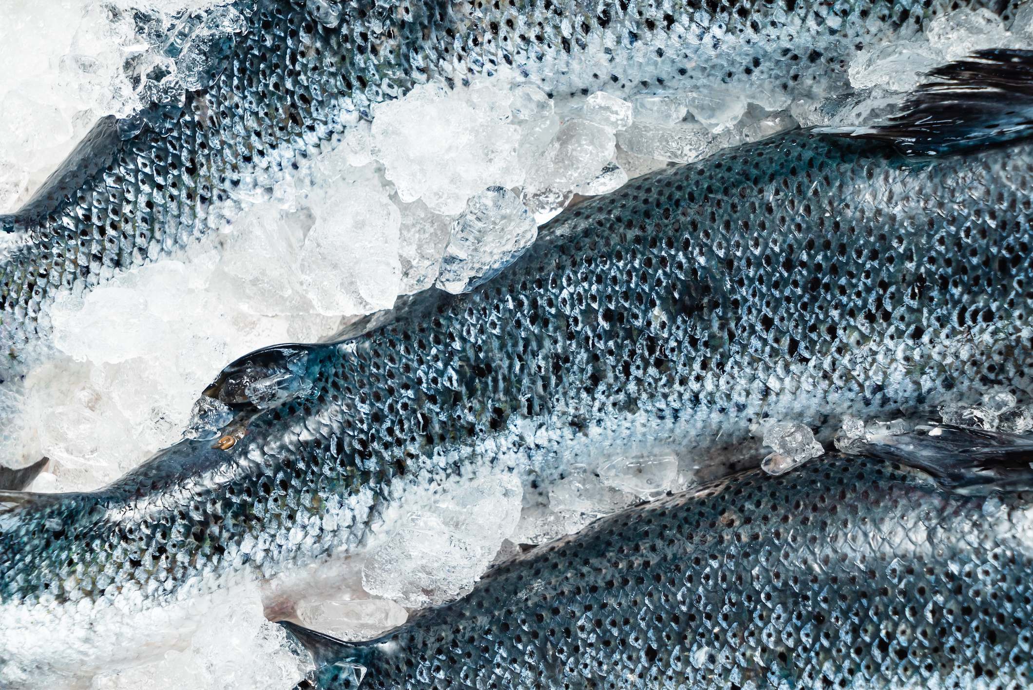 Fryst fisk
