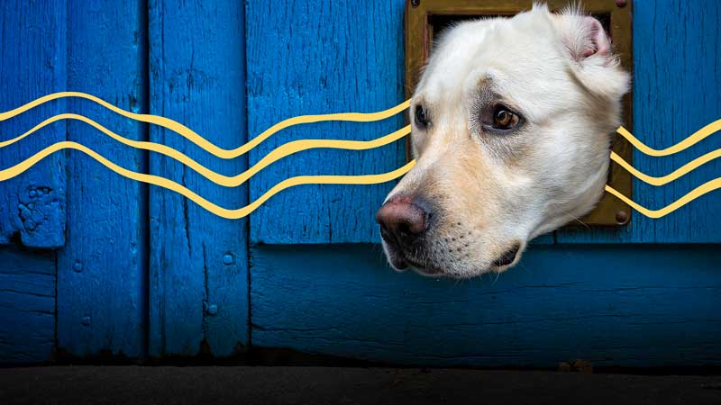 Image of dog looking out from a window with blue overlay in background