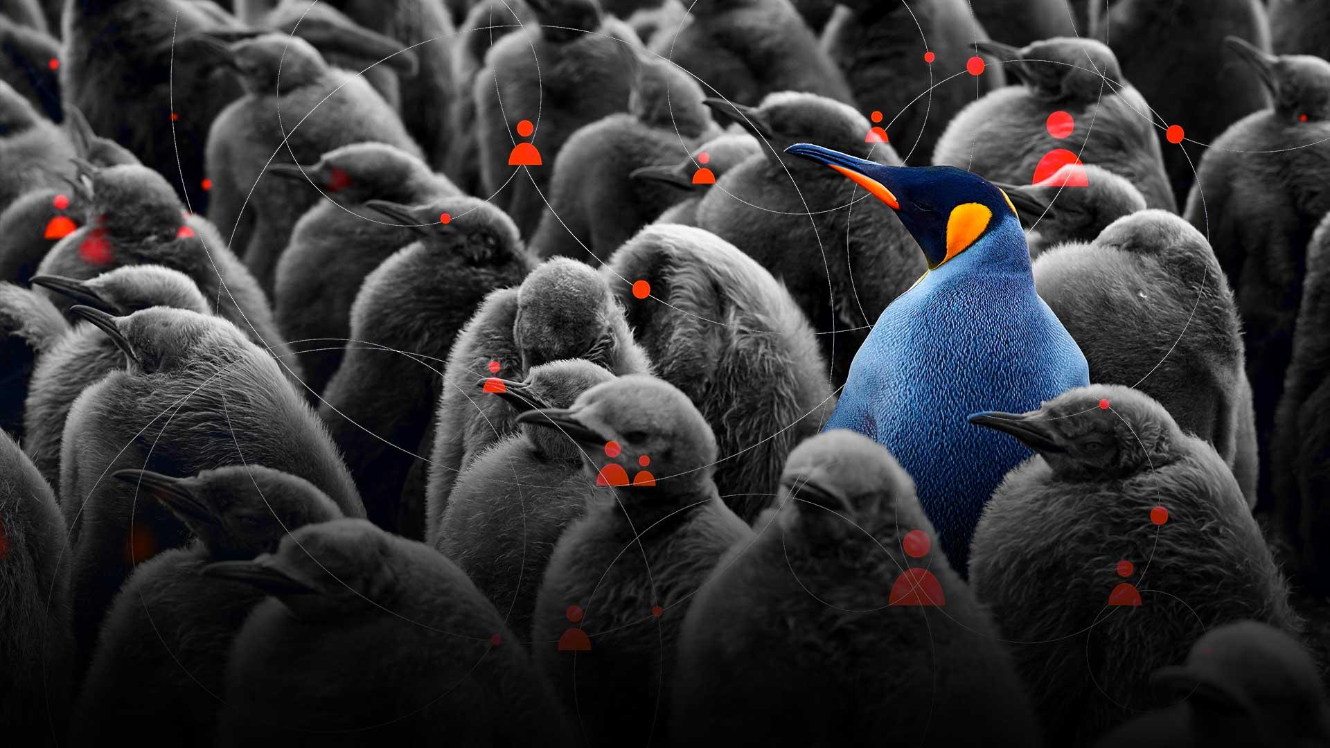 A flock of penguins