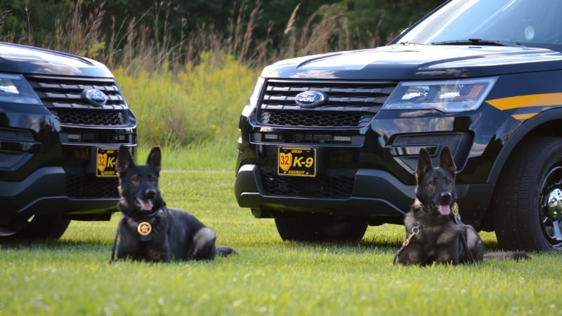 K-9s with vehicles