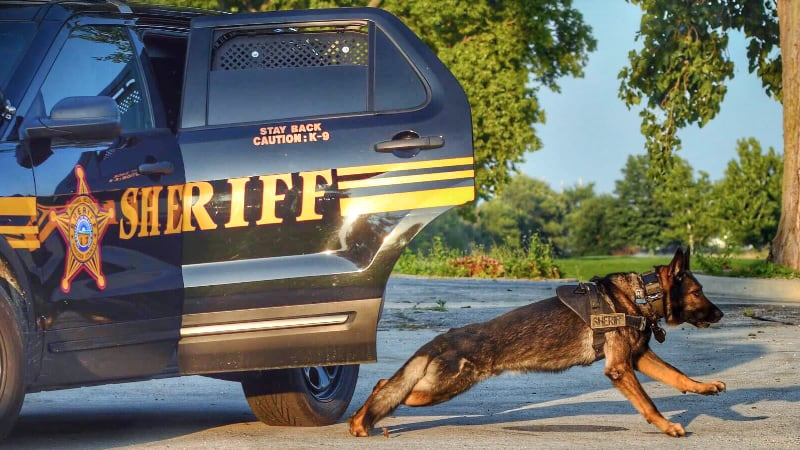 K-9 Lunging from Vehicle