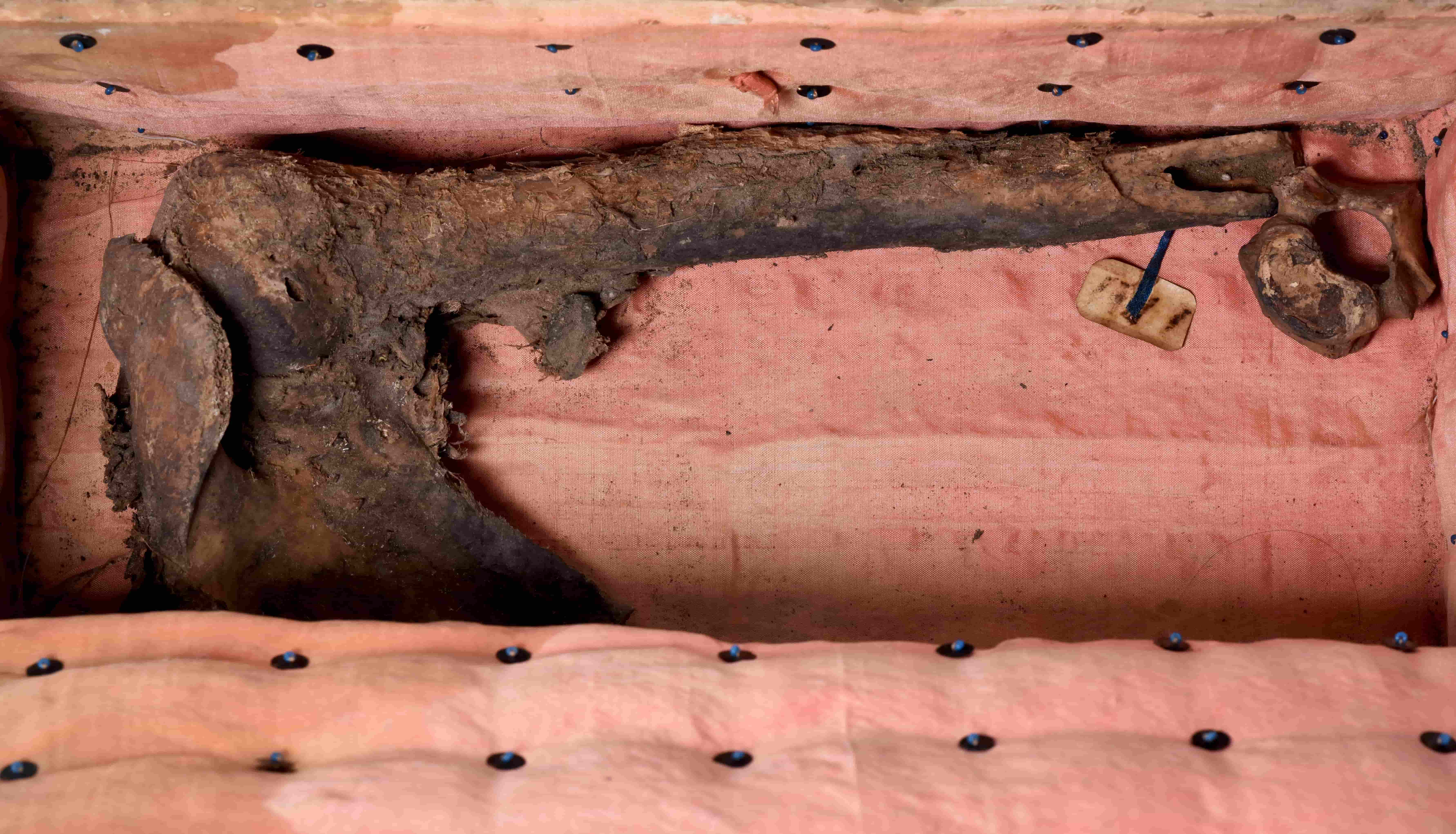 The interior of a chest lined with pink fabric. There is a human shoulder blade attached to an upper arm bone inside