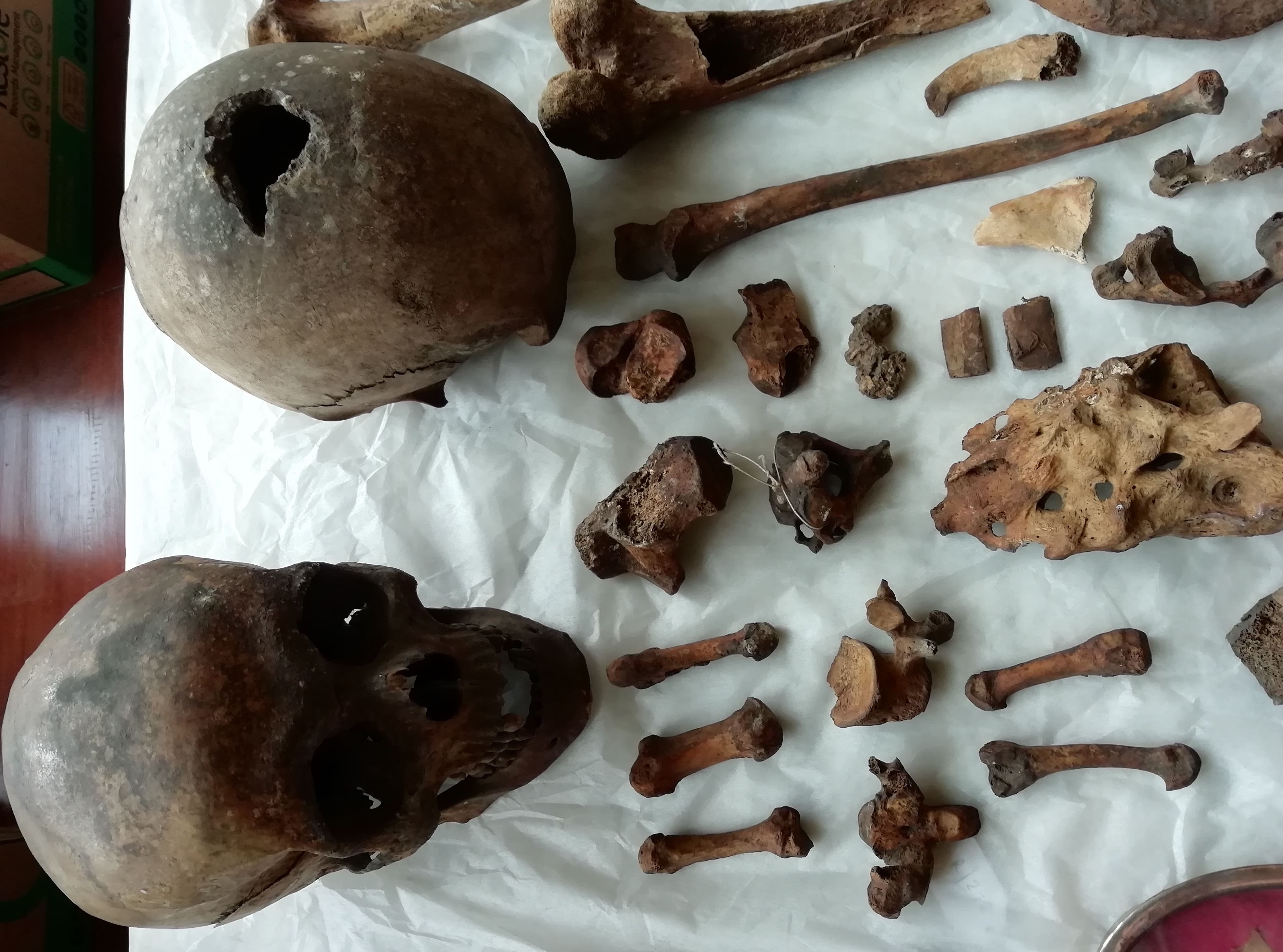 Two skulls and several pieces of bone laid out on a table