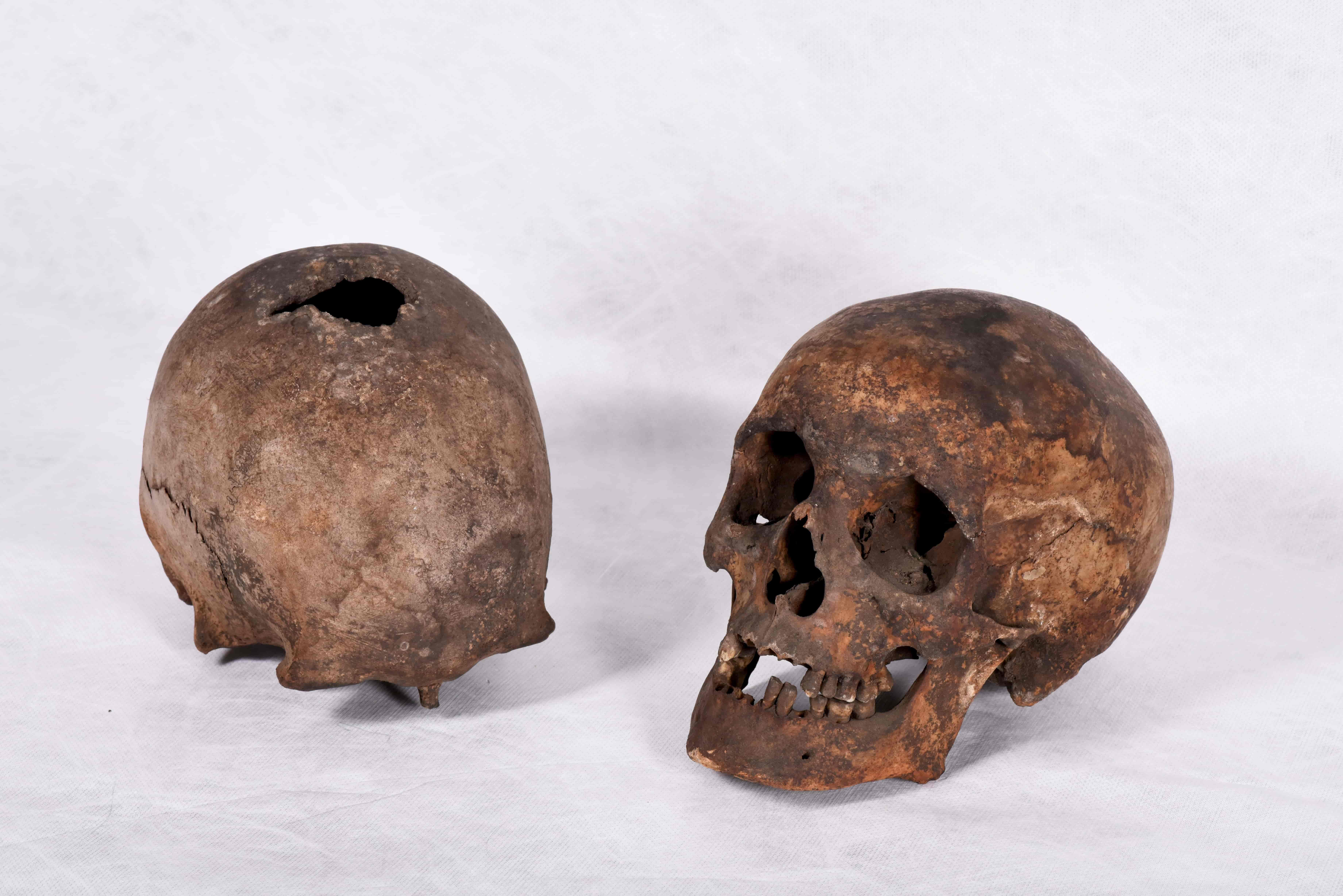 Two skulls on a white background. One of the skulls has a hole in the top