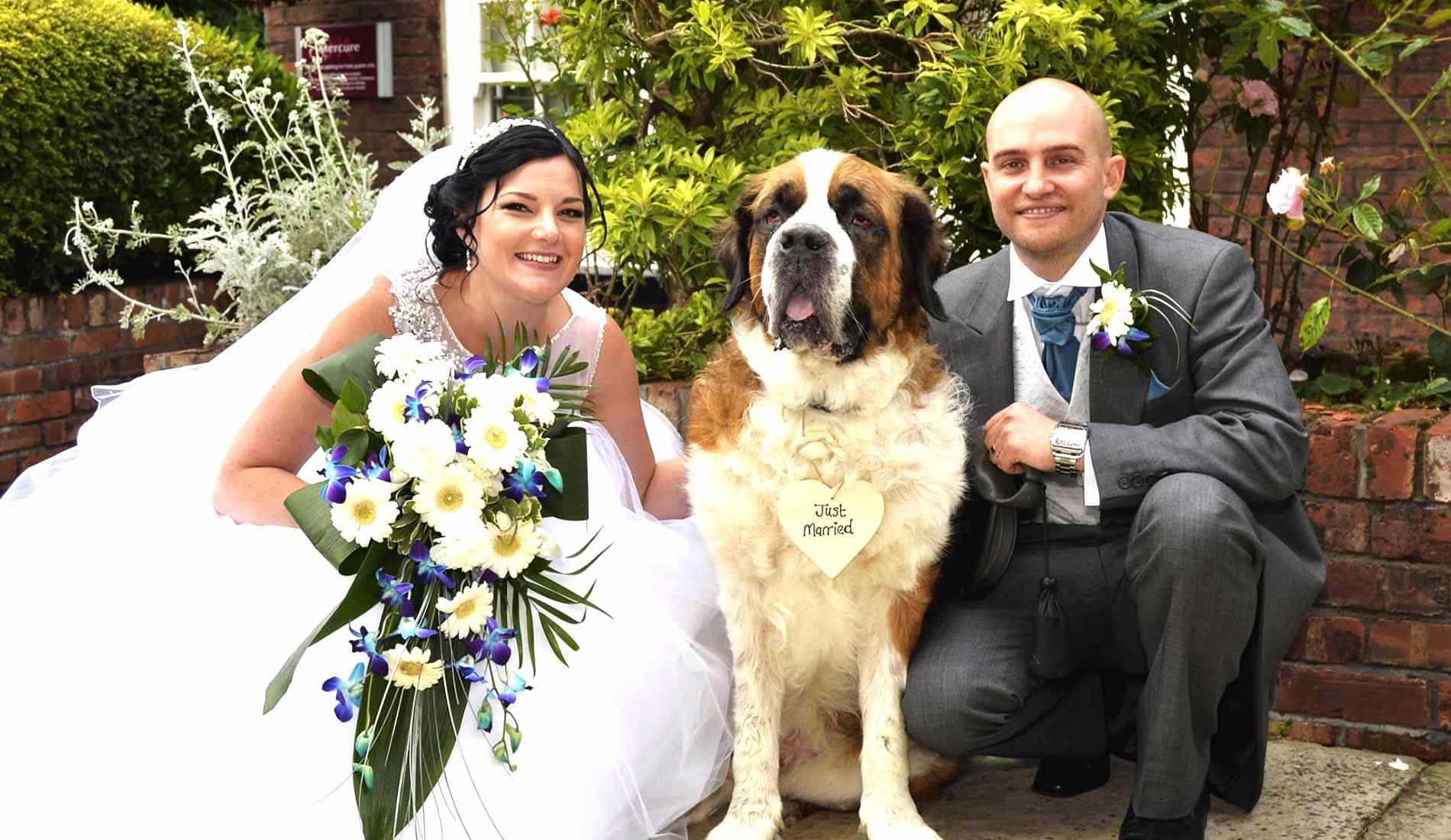 wedding day dog chaperone