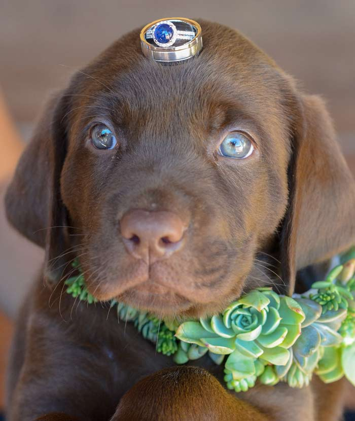 wedding-day-dog-chaperone service