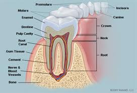 Fractured Tooth Guide