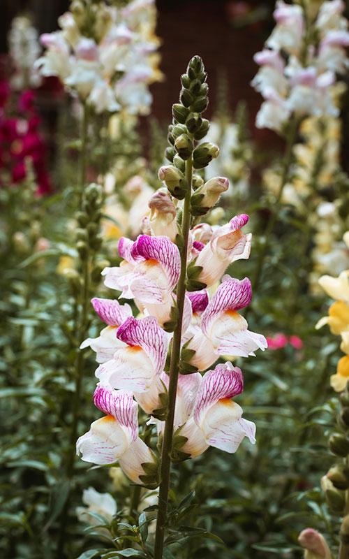 Little Hill Flower Farm by Hannah Swank
