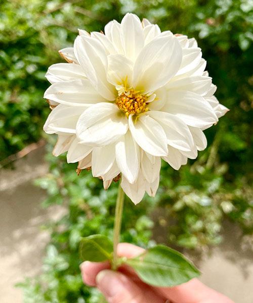 You-Pick Flower Farm Knox County, Indiana