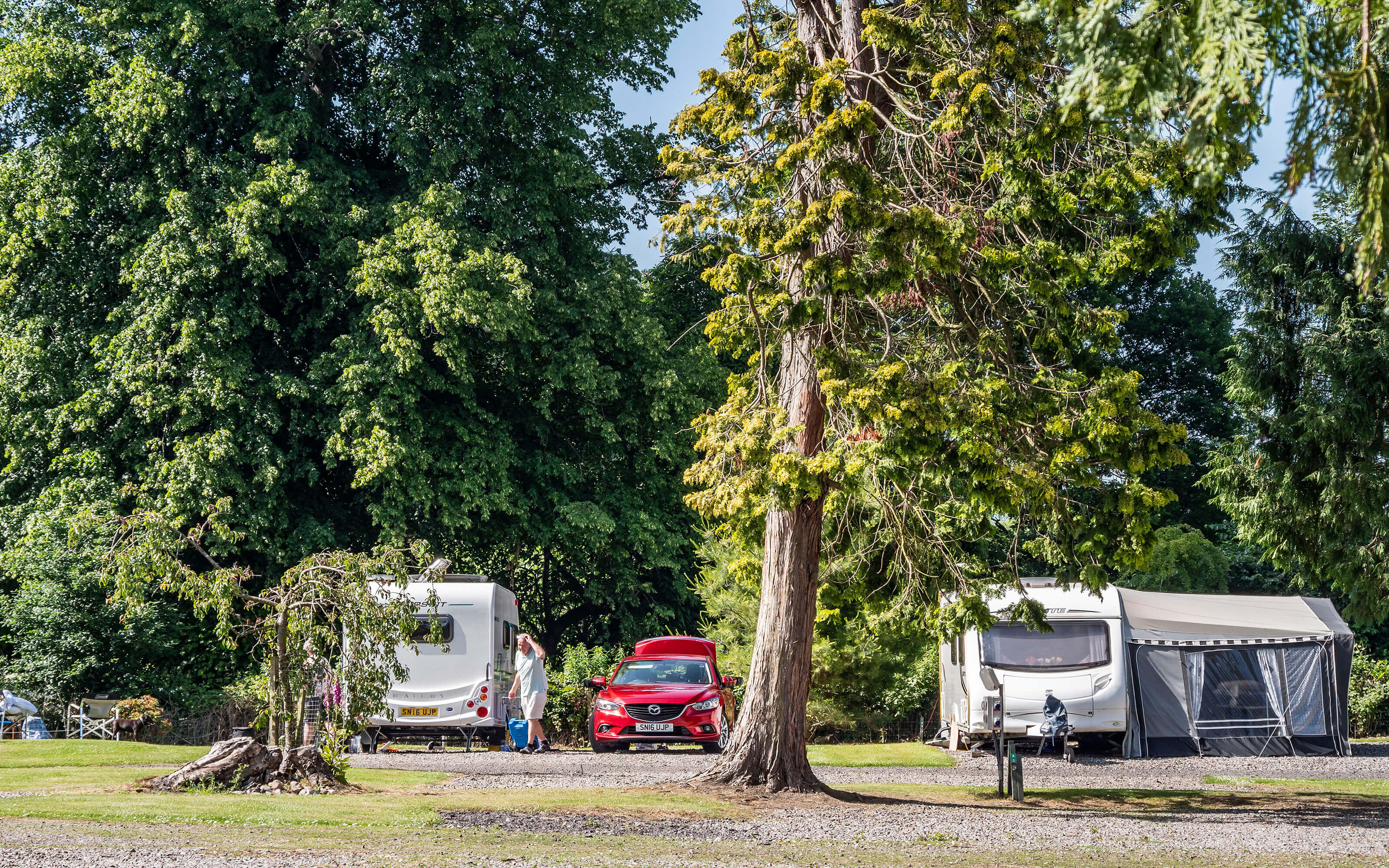 A group of caravans by some large the trees.