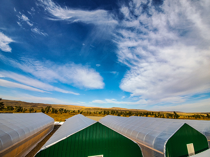 Horizon picture over green houses.