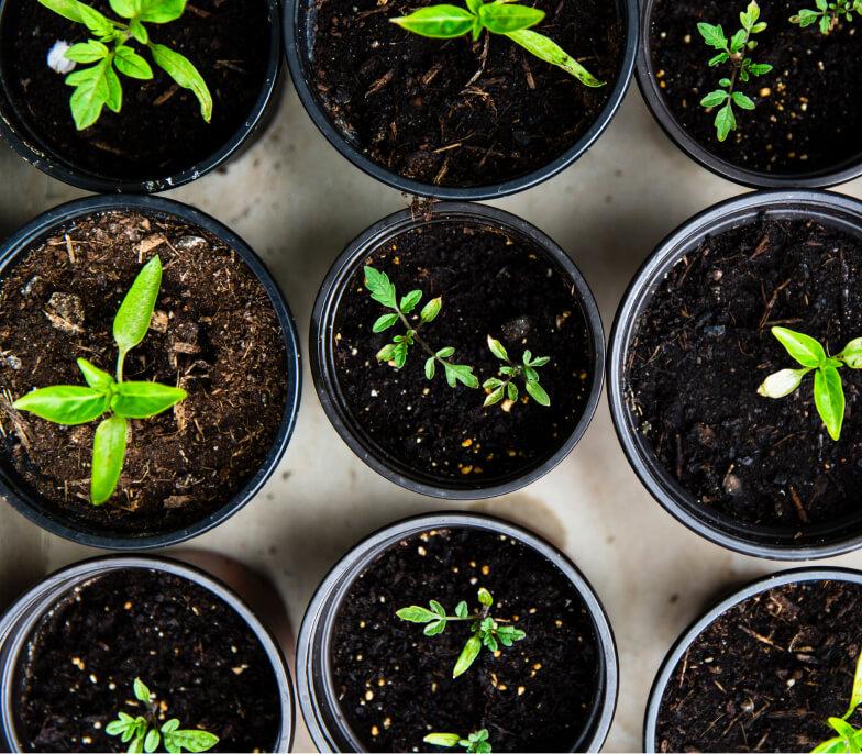 9 very vibrate green seedlings