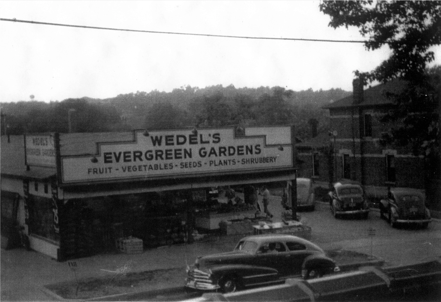 "1955, all produce was cleared out and Harley and his boys Dick, George & Roger opened the area's first one-stop garden center ""Wedel's Evergreen Gardens"""