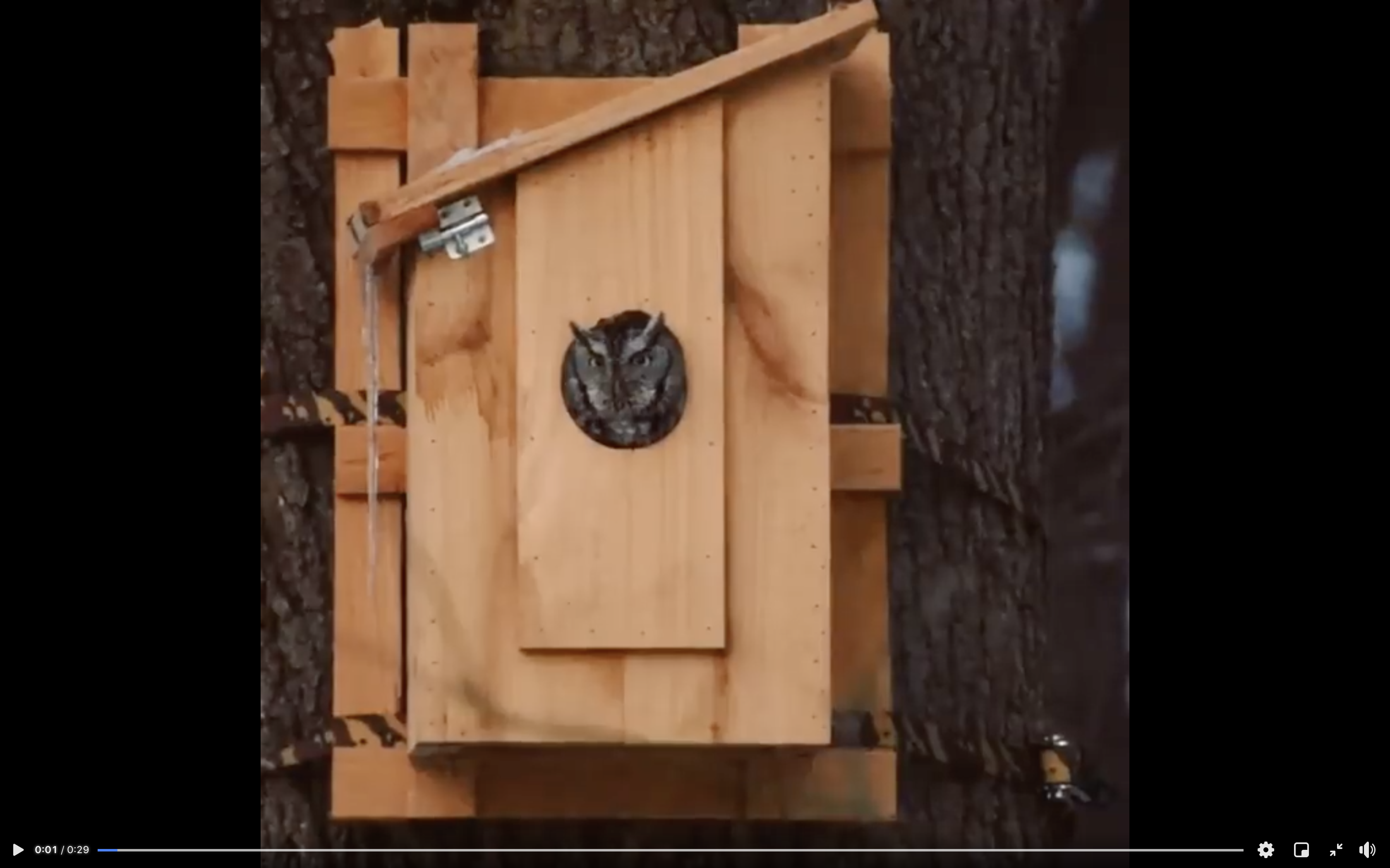 Owl inside of a well put together stained bird house