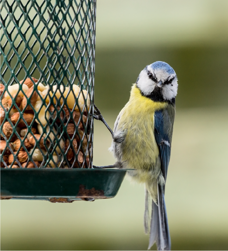 Bird Feed Frequent Buyer Program