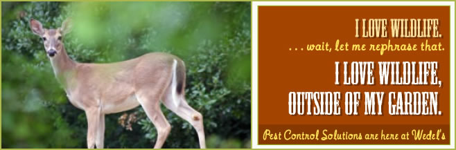photoheader_animalcontrol