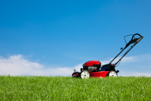 Wedels - Lawn and Mower