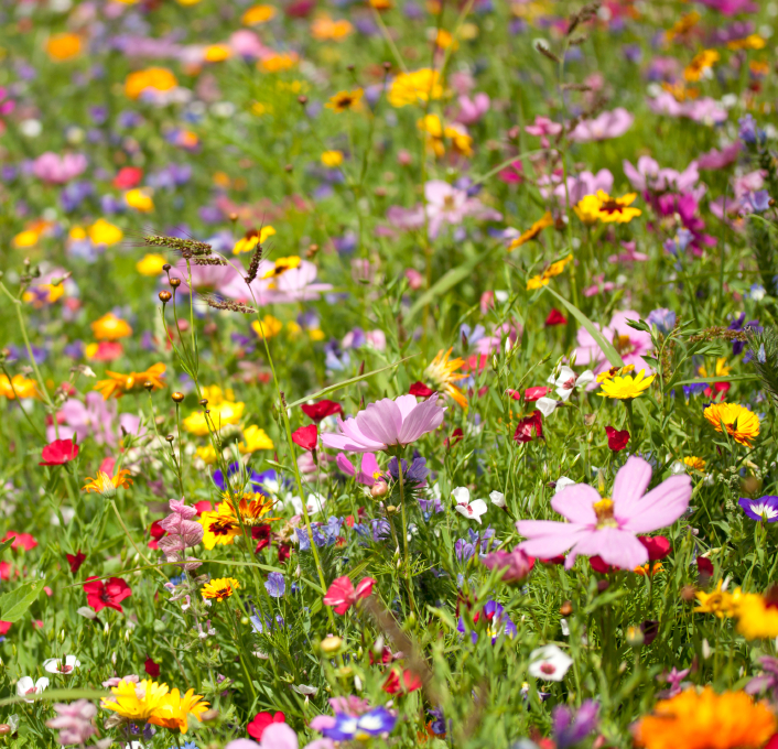 Guide for Planting a Wildflower Garden