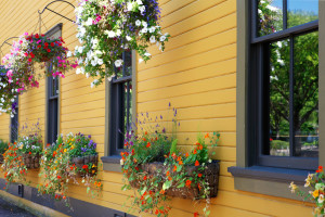 Flowers in hanging basket with yellow wall.