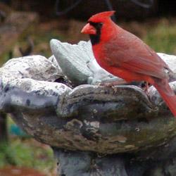 Birdscaping_2