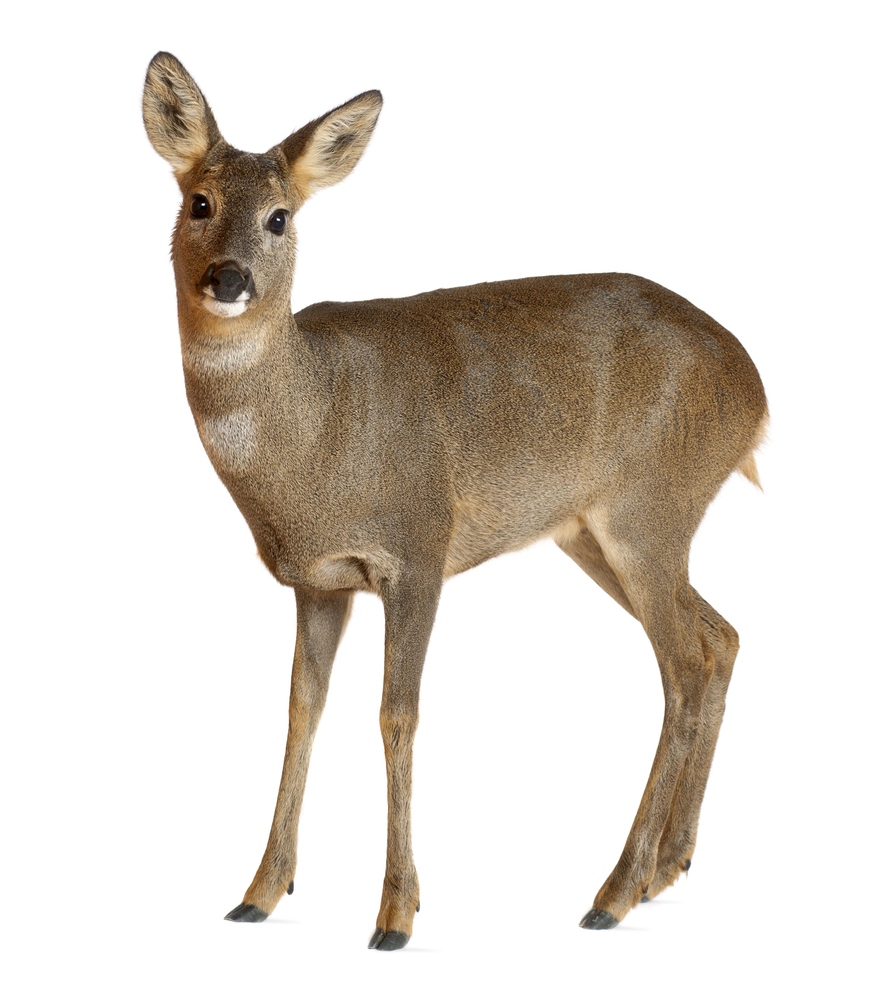 Deterring Deer