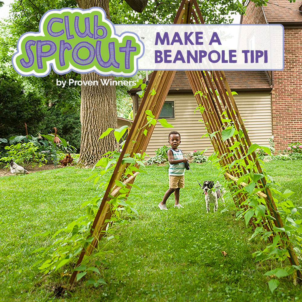 How to Make a Beanpole Tipi