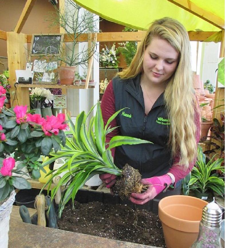 Houseplant Repotting