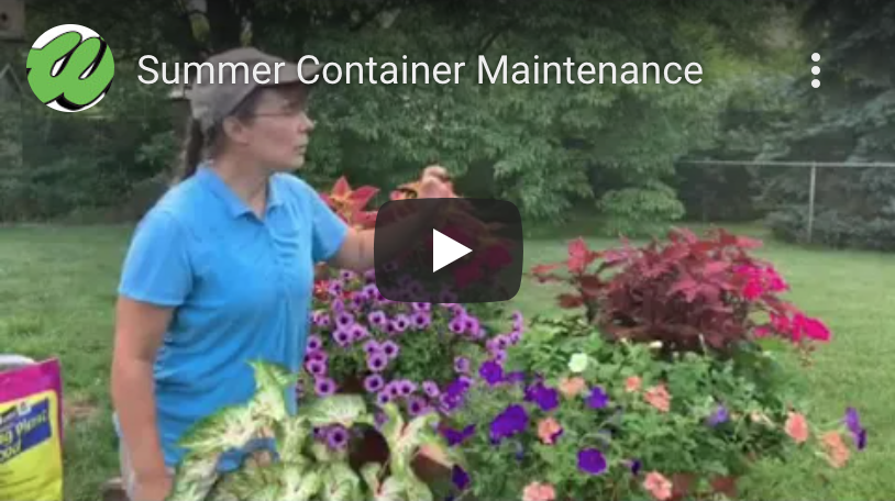 Summer Container Maintenance