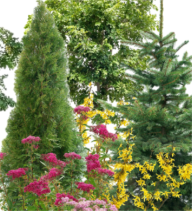 Trees, Shrubs & Evergreens