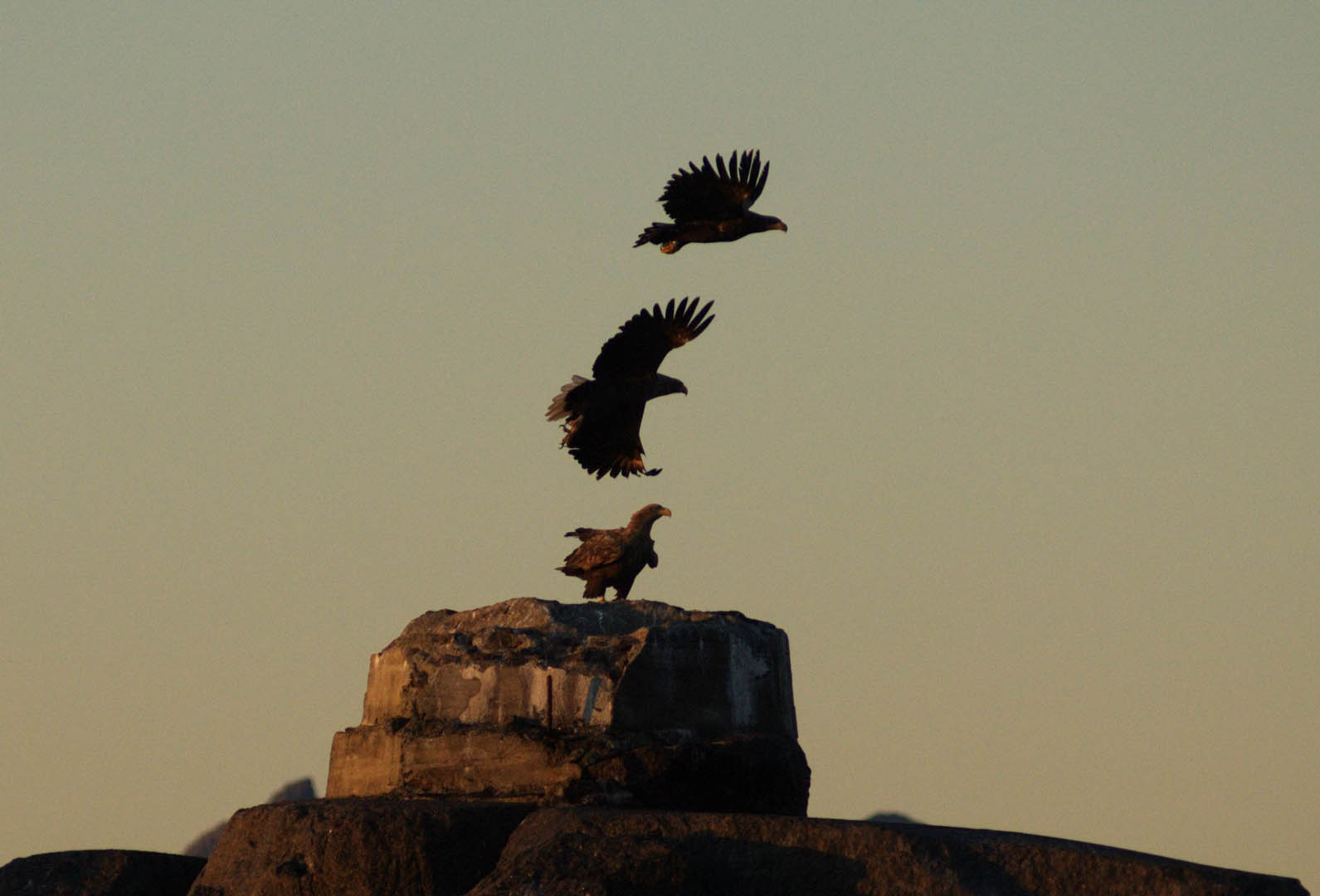 Eagle Safari