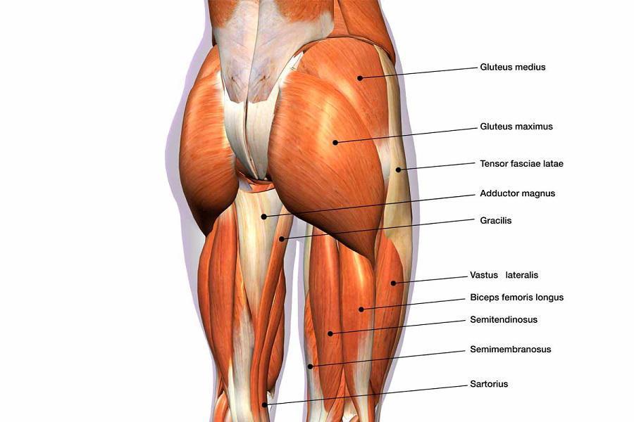 Gluteus Medius Weakness & Back Pain