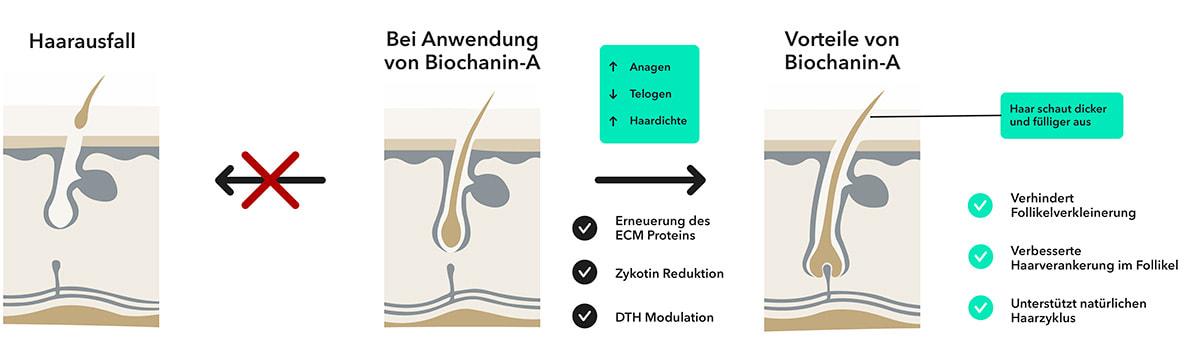 Wirkungsweise MySpring Biochanin-A Haarserum