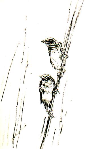 Zeichnung Vögel