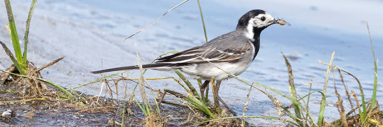 Vogelbeobachtung Illmitz