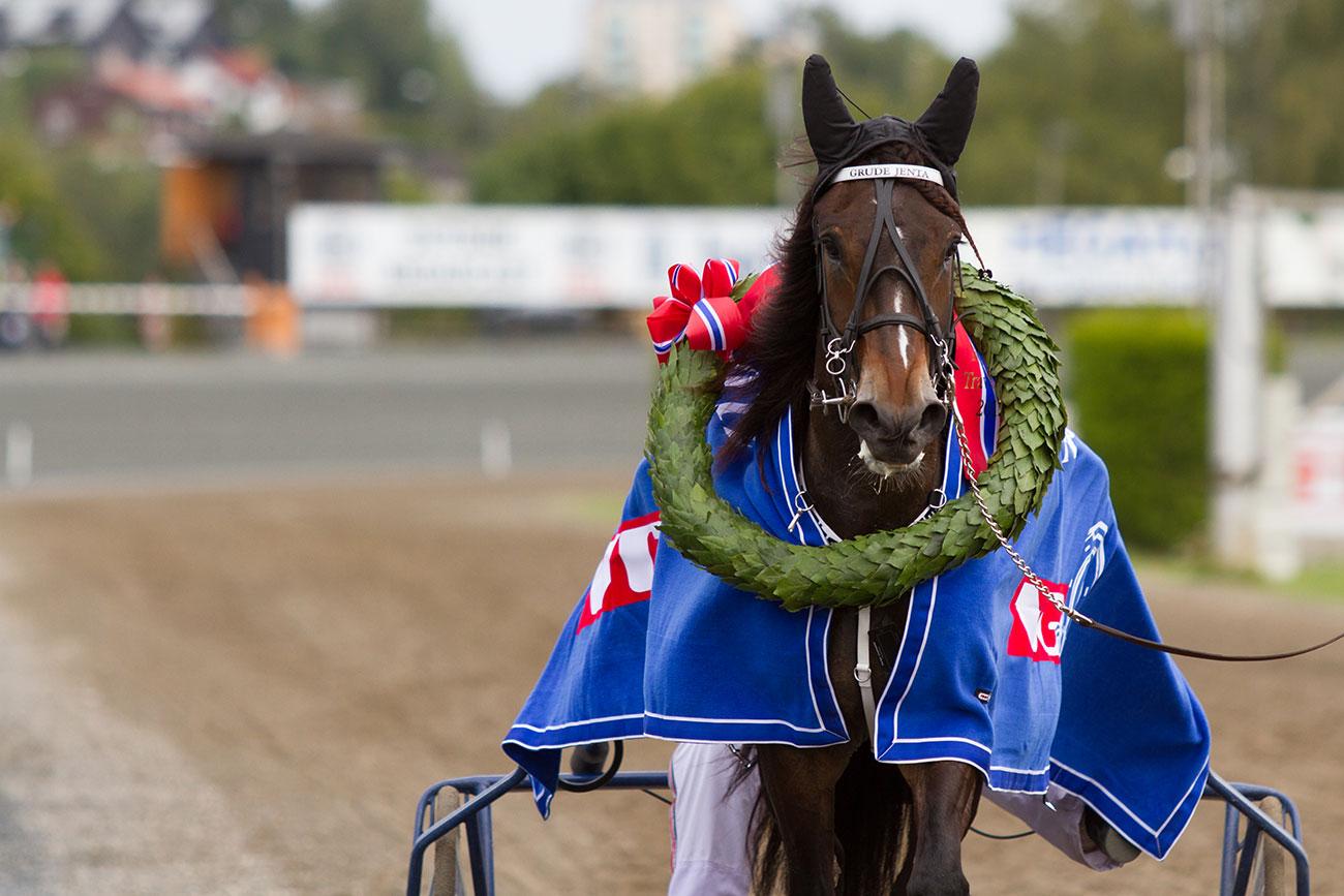 Bilde av hesten Grude jenta