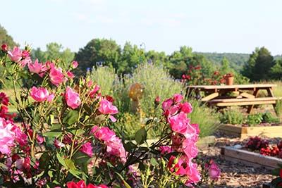 Flower garden at our studio.