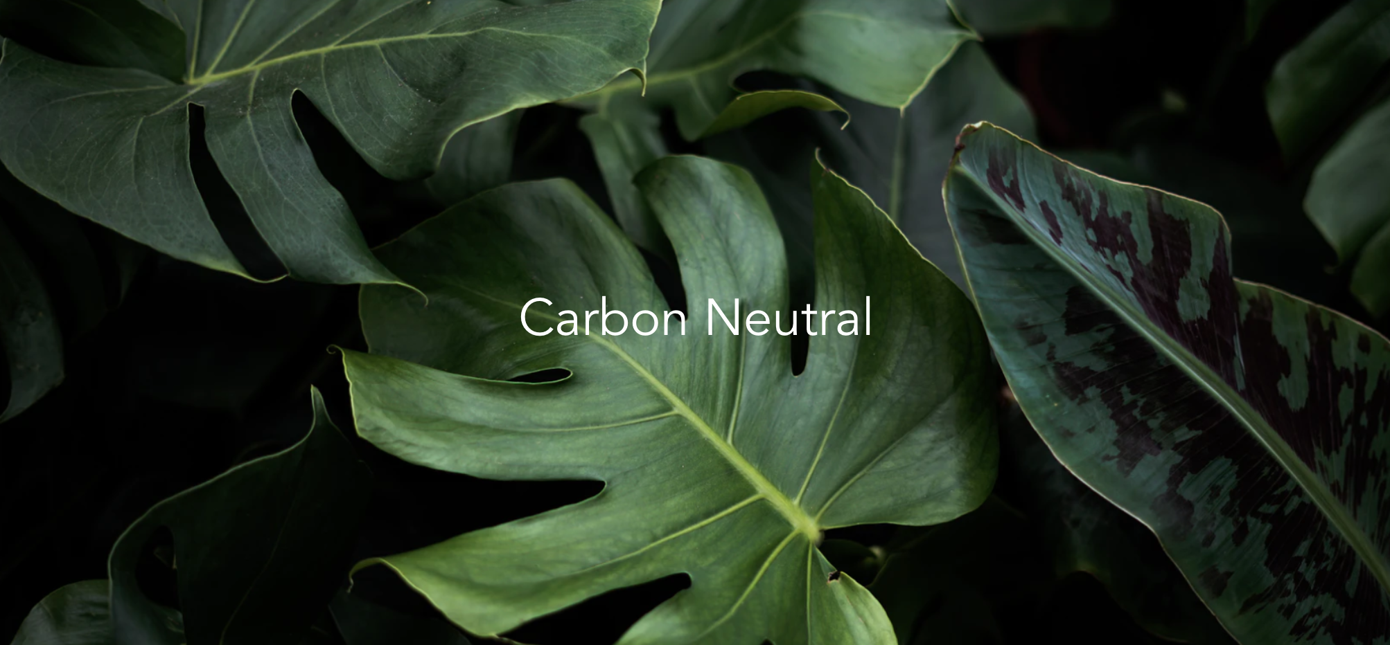 Carbon Data is Expanding: Here's How
