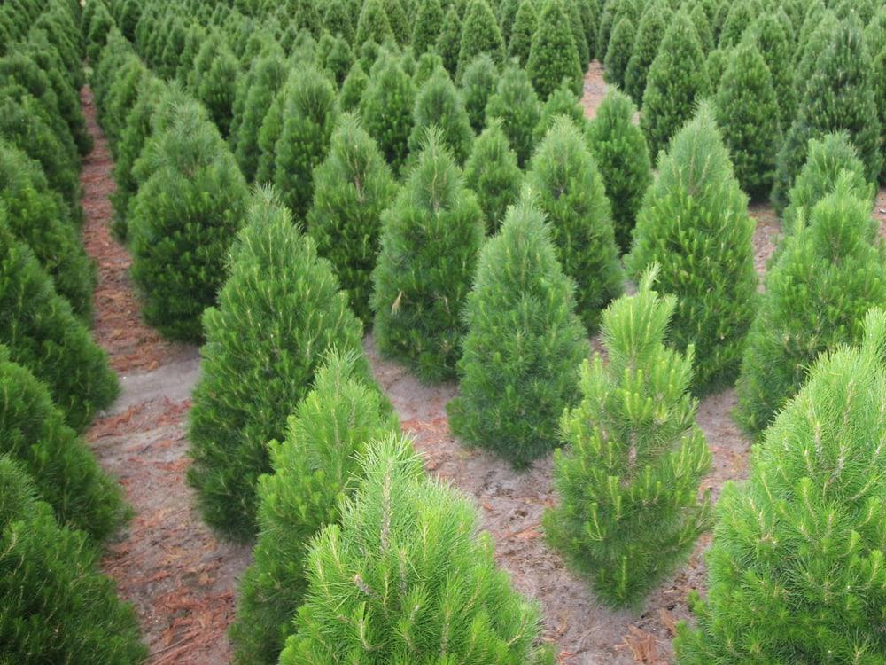 Type of trees