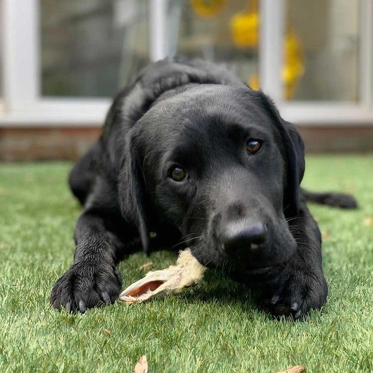 Naturally Pawfect - natural dog treats available online shop