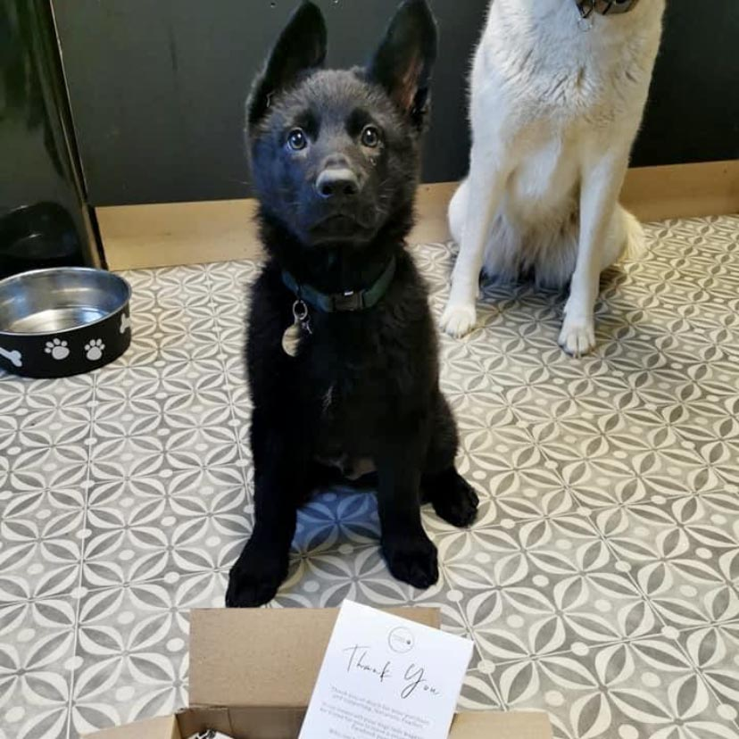 Naturally Pawfect dog treat boxes available online shop