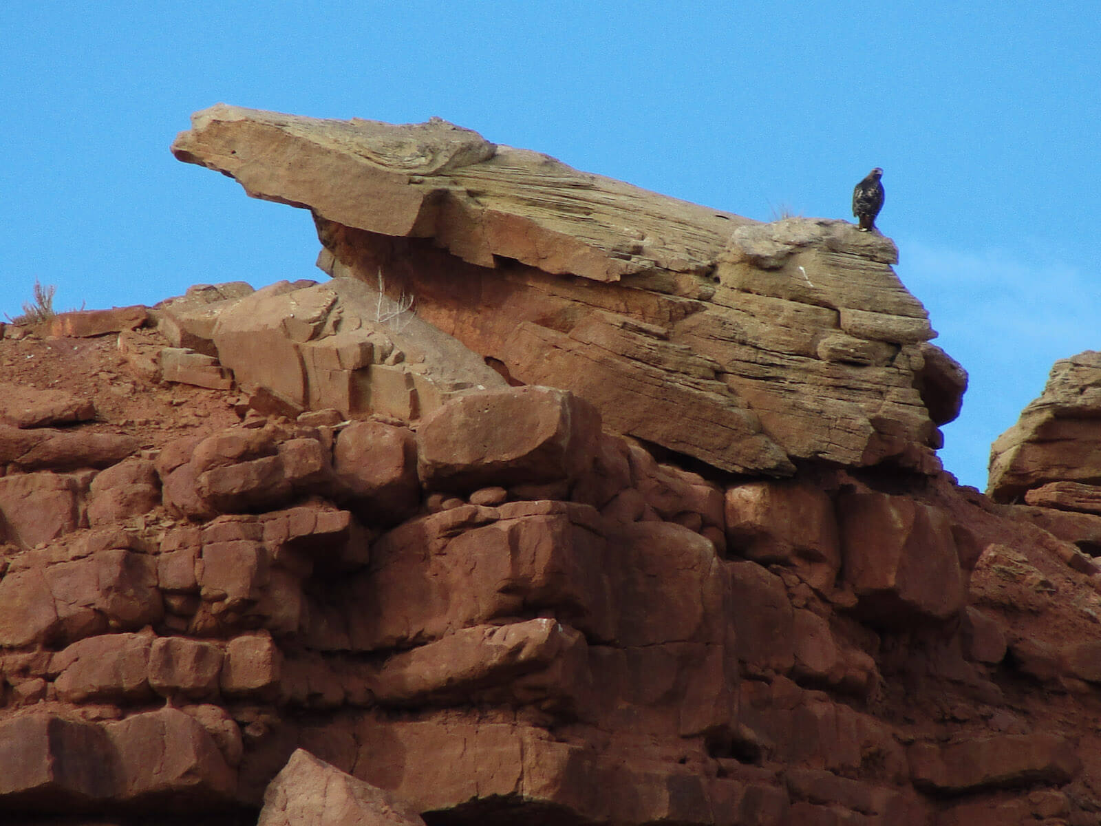 Eagle Perched Atop Mesa