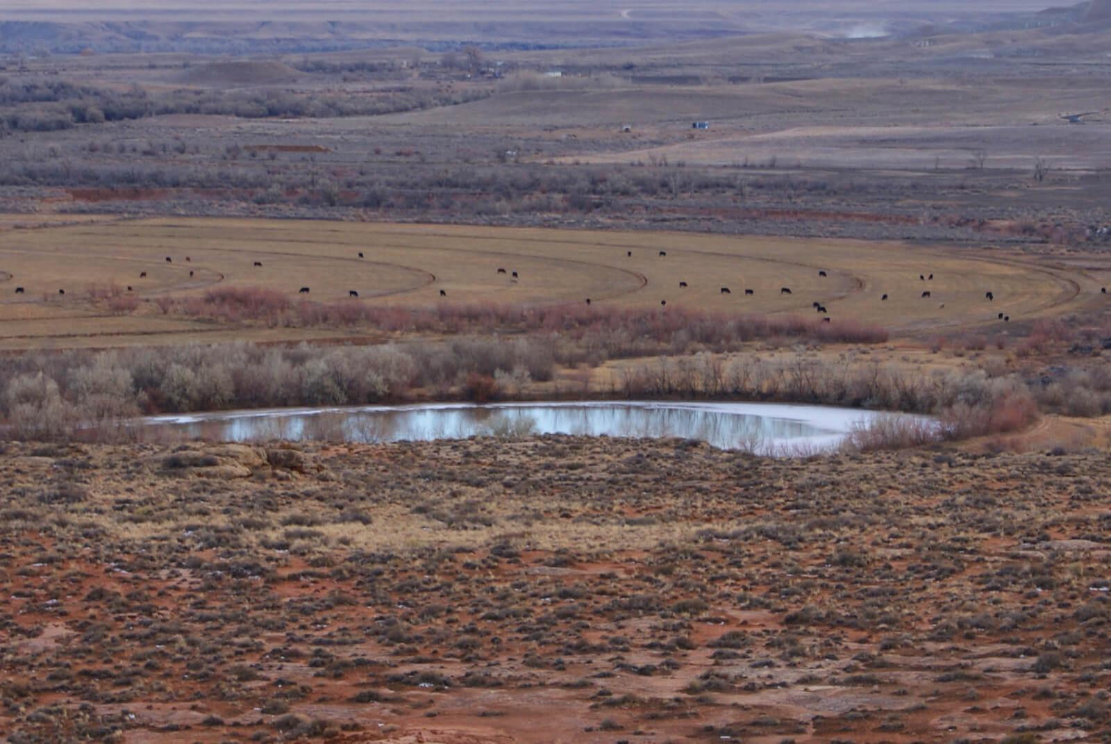 Mesa Pond