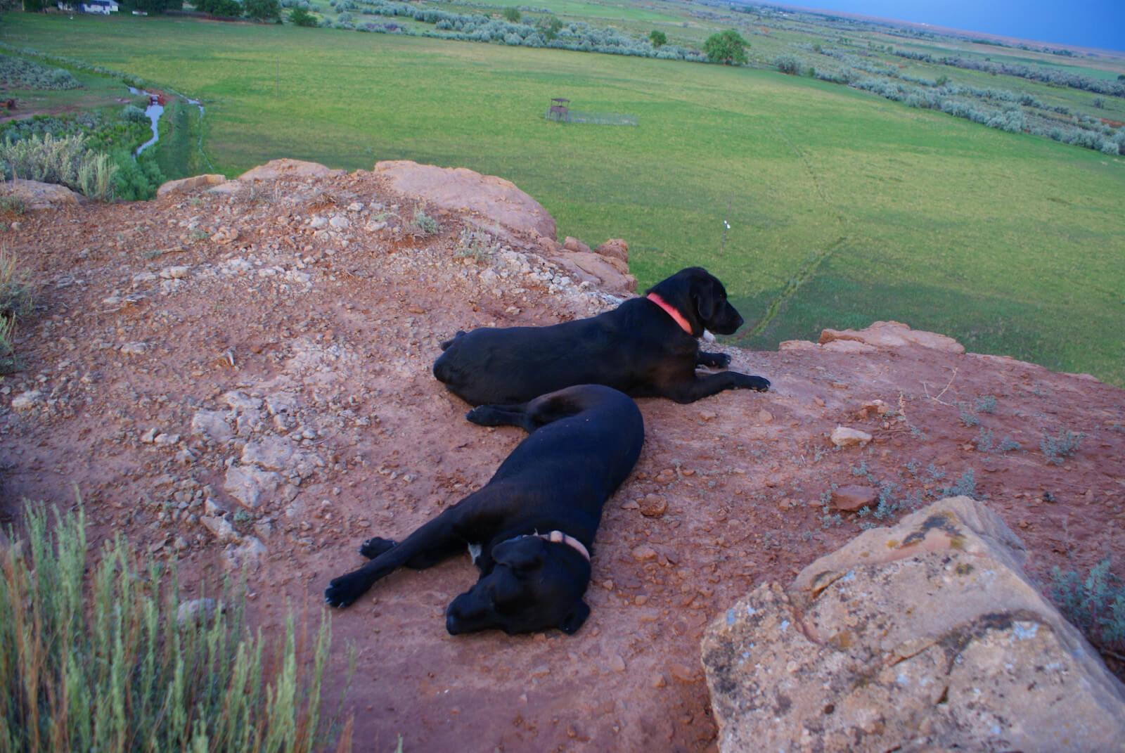 Ranch Dogs Rucca and Max Resting